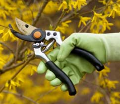 Photo of pruning--a landscape maintenance service provided by All Pro Maintenance